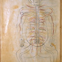 The Anatomy of the Human Body (1488), The nervous system - تشريح بدن انسان (۱۴۸۸ میلادی)، سیستم عصبی