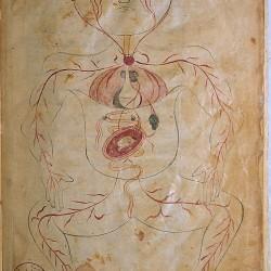 The Anatomy of the Human Body (1488), The figure of a pregnant woman - تشريح بدن انسان (۱۴۸۸ میلادی)، تصویر زن باردار