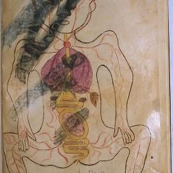 The Anatomy of the Human Body - تشريح بدن انسان
