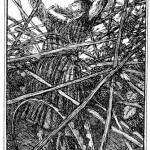 Edmund J Sullivan Illustrations to The Rubaiyat of Omar Khayyam (16)