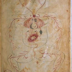 The Anatomy of the Human Body (1488), The figure of a pregnant woman - تشريح بدن انسان (۱۴۸۸ میلادی)، تصویر زن باردار
